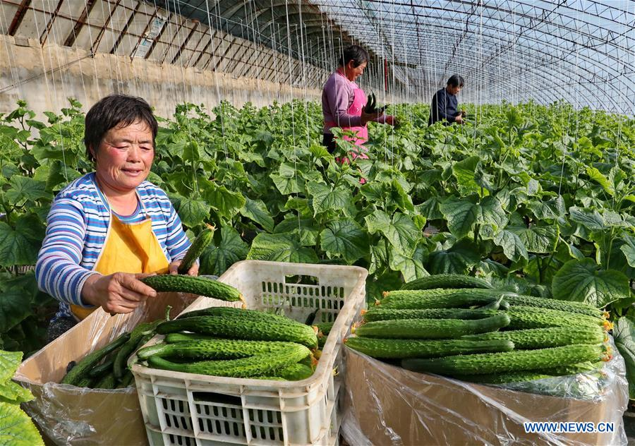 CHINA-HEBEI-QIANAN-AGRICULTURE (CN)