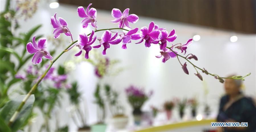 #CHINA-SANYA-INTERNATIONAL ORCHID SHOW (CN)
