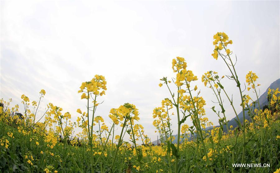 #CHINA-BEGINNING OF SPRING-FLOWER(CN)