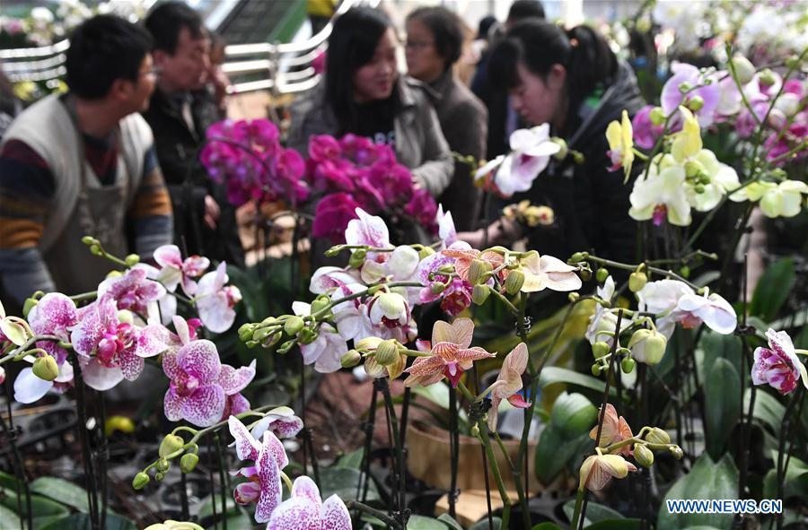 CHINA-YUNNAN-FLOWER INDUSTRY (CN)