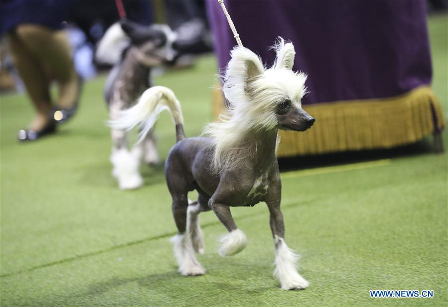 U.S.-NEW YORK-DOG SHOW