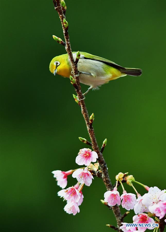 CHINA-FUZHOU-BIRDS-FLOWER (CN)
