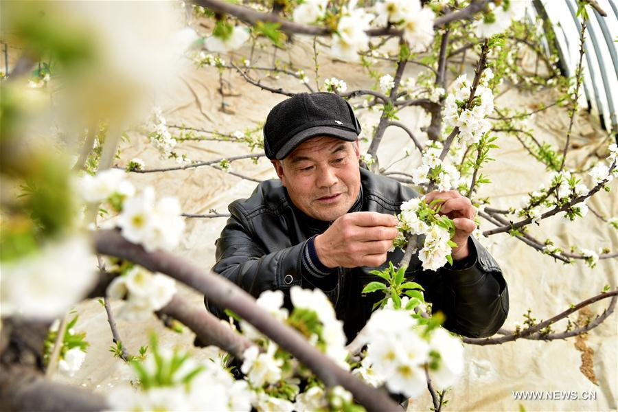 #CHINA-EARLY SPRING-AGRICULTURE (CN)