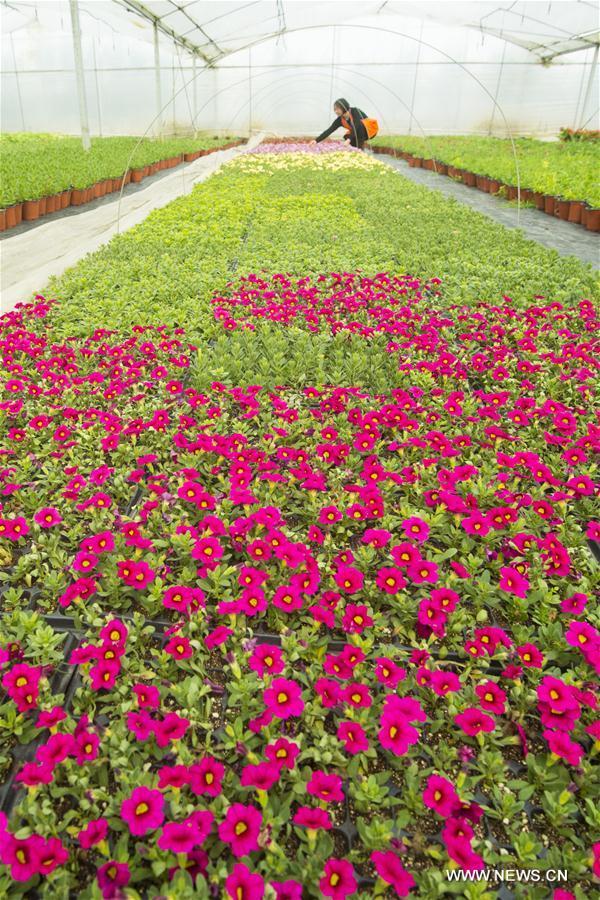 #CHINA-JIANGSU-HAI'AN-FLOWER-INDUSTRY(CN)