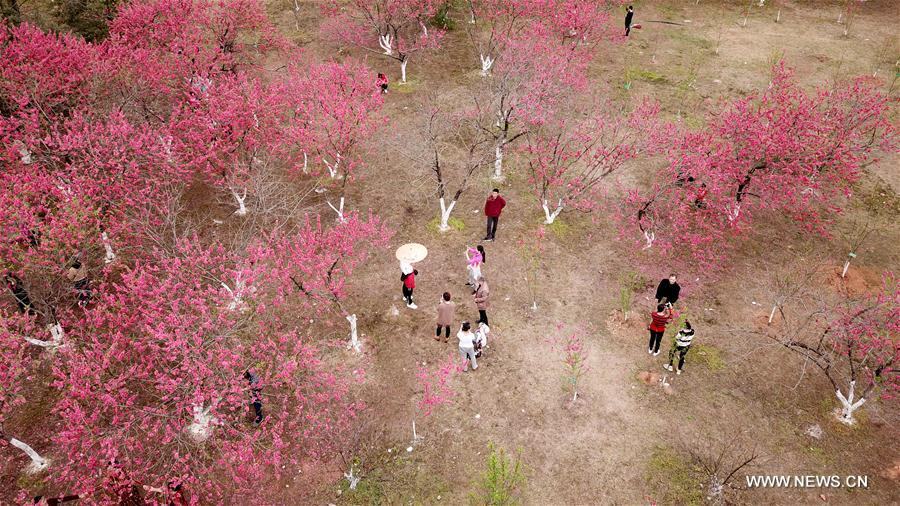 #CHINA-EARLY SPRING SCENERY-FLOWERS (CN)