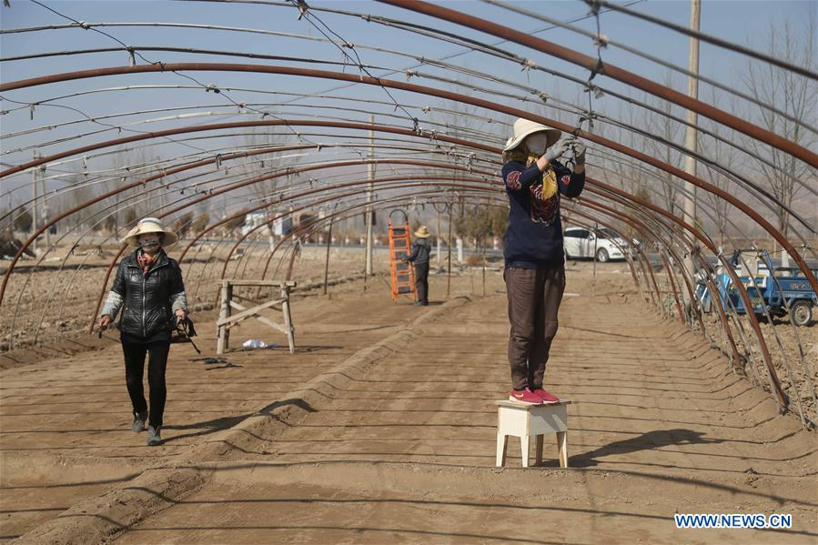 #CHINA-FARM WORK(CN)