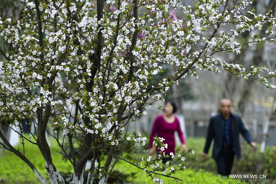 Flowers bloom by the Gongshui River in Xuan'en County, central China's Hubei Province, March 13, 2018. (Xinhua/Song Wen)<br/>