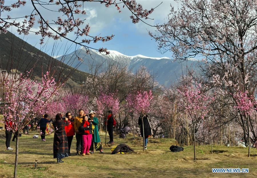 Peach blossoms in Baiyi District of Nyingchi, SW China's Tibet
