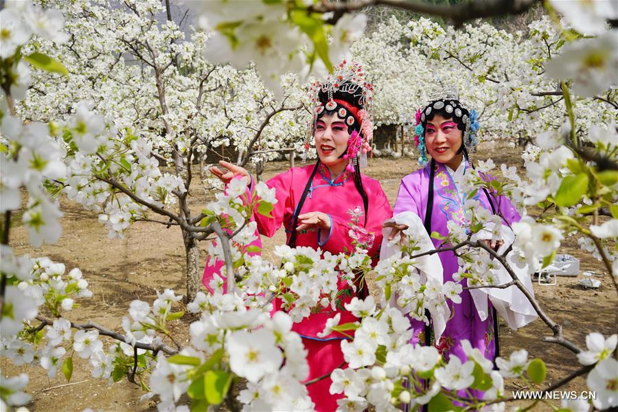 Opera lovers in costumes perform at a pear garden of Longquangu scenic spot in Fengrun District of Tangshan, north China's Heibei Province, April 10, 2018. (Xinhua/Mu Yu)