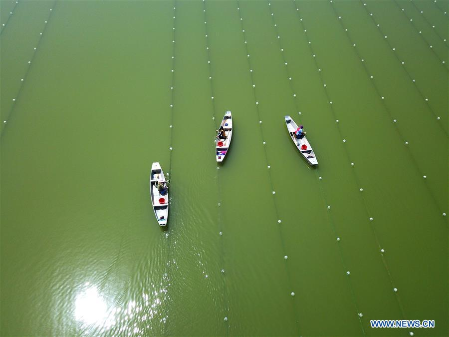 People work at pearl farm in reservoir in E China's Jiangsu