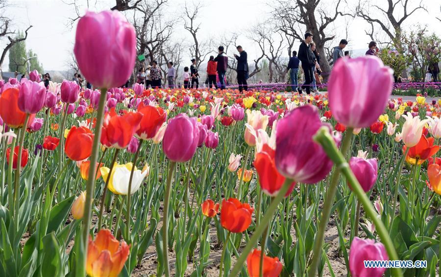 Spring Flowers Bloom Across China Xinhua Englishws