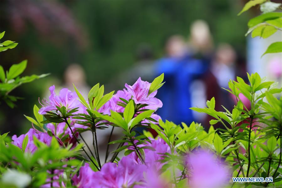 Spring flowers bloom across china xinhua englishws china spring flowers cn mightylinksfo