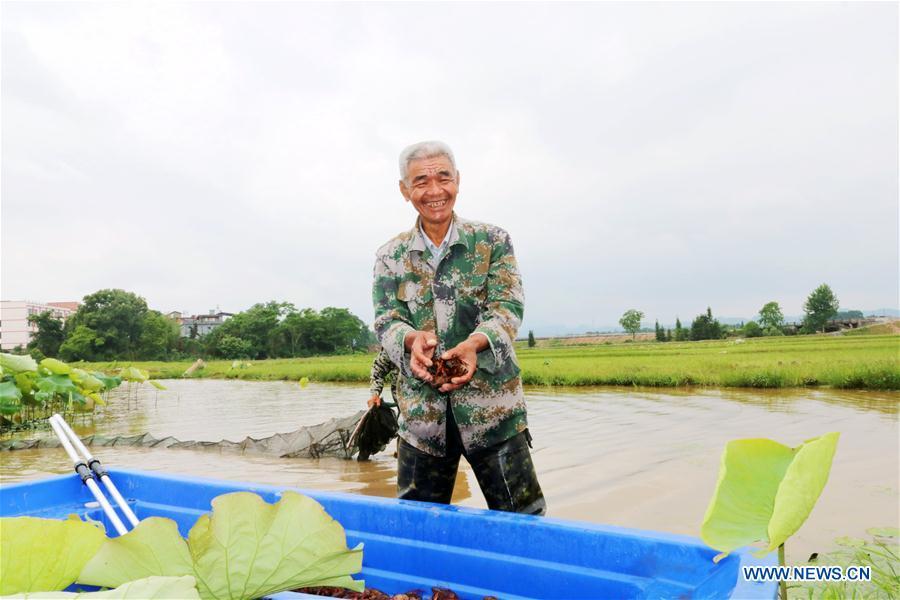 #CHINA-EARLY SUMMER-FARM WORK(CN)
