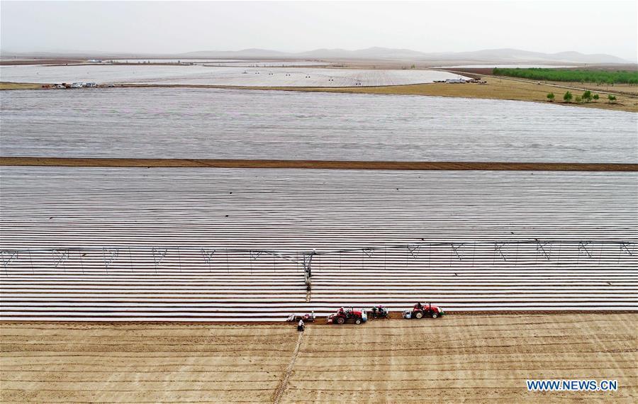 CHINA-HEBEI-EARLY SUMMER-FARMING (CN)