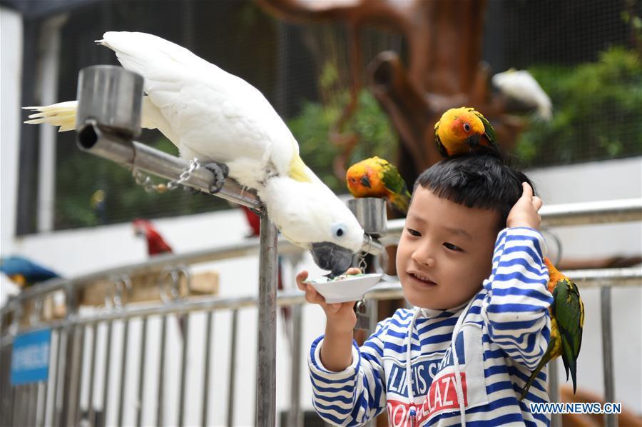 中国 - 重庆 - 汝桐园开业(中国)