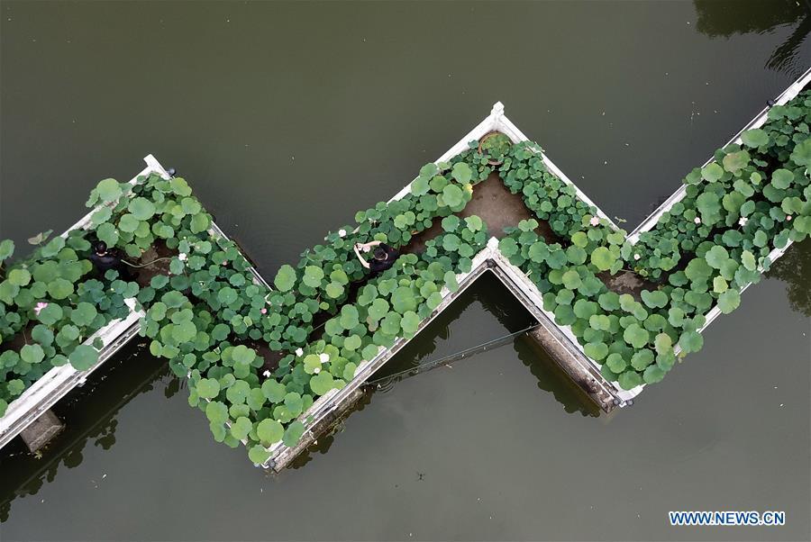 CHINA-HEFEI-LOTUS(CN)