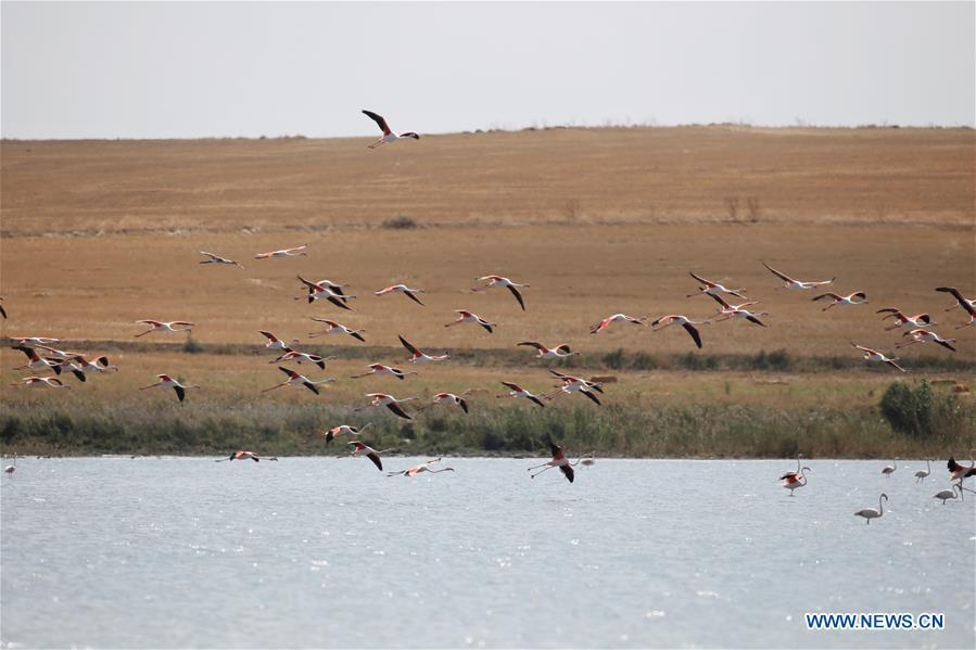 TURKEY-DUDEN LAKE-FLAMINGOS