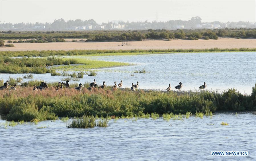 TUNISIA-GAMMARTH LAKE-BIRDS-MIGRATION