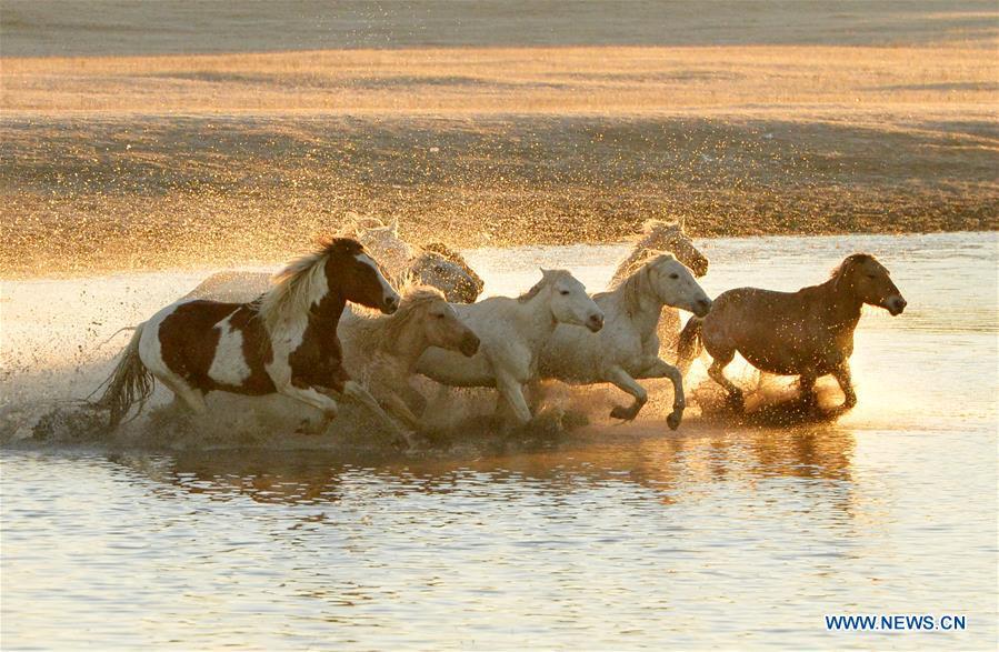 #CHINA-INNER MONGOLIA-GRASSLAND-HORSES (CN)