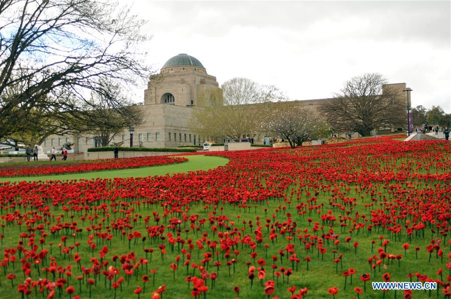 how to grow poppies in australia