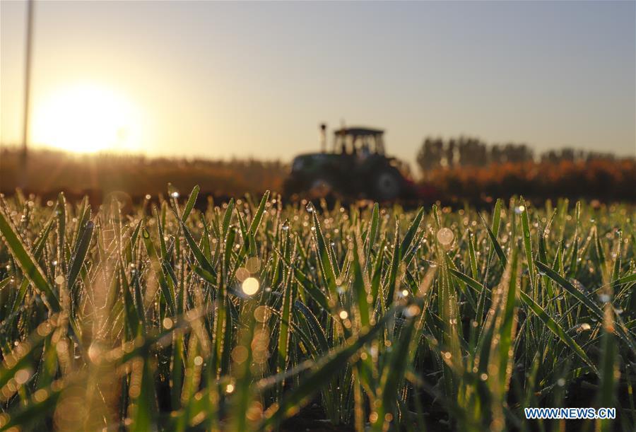 #CHINA-AUTUMN-FARMWORK (CN)