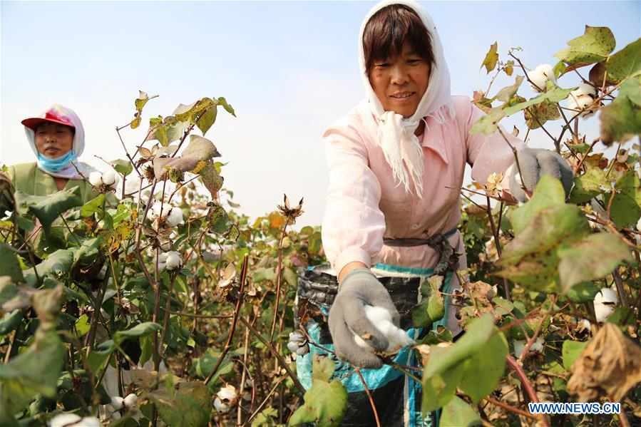 #CHINA-AGRICULTURE-HARVEST (CN)