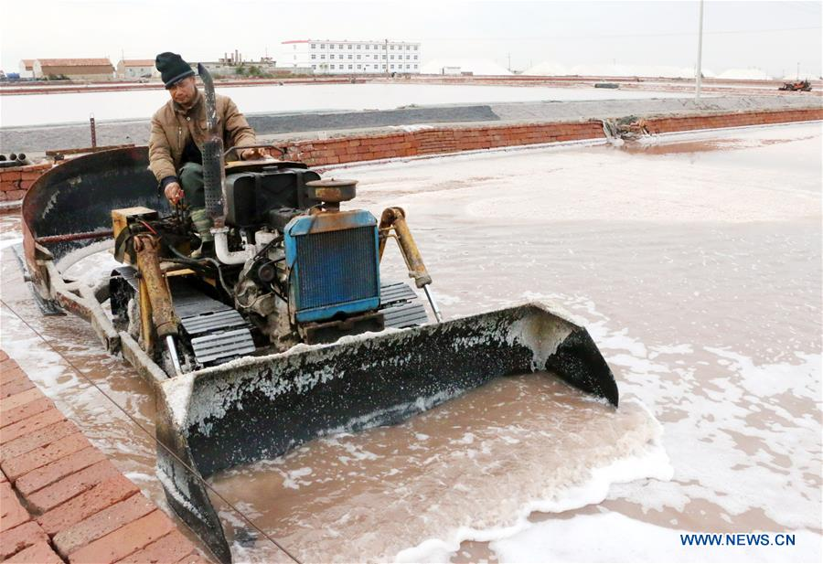 #CHINA-SHANDONG-SALT HARVEST (CN)