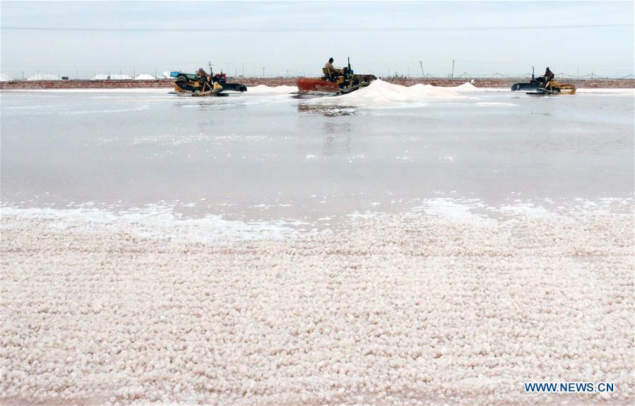 #CHINA-SHANDONG-SALT HARVEST (CN)
