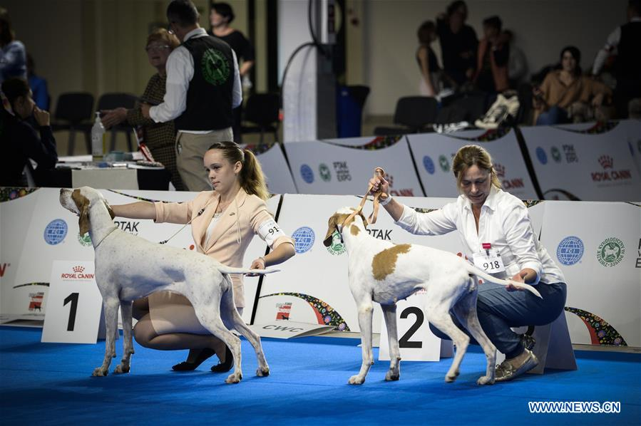 Euro Dog Show 2018 held in Poland - Xinhua | English news cn