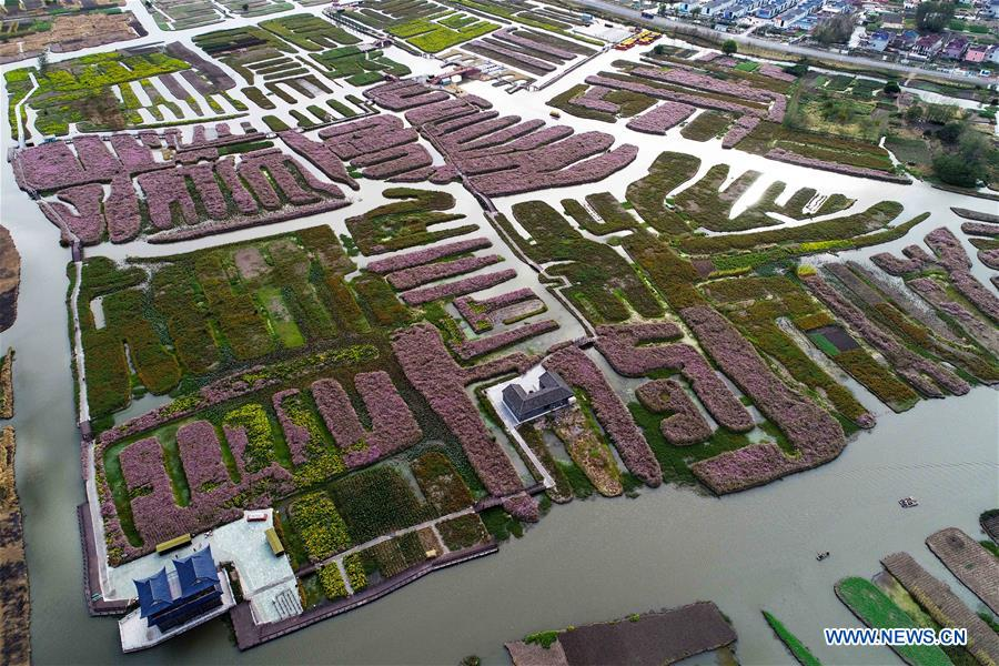 #CHINA-JIANGSU-AUTUMN SCENERY-FLOWER(CN)