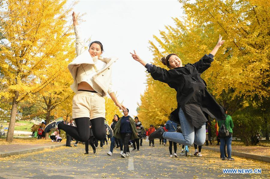 CHINA-LIAONING-GINKGO (CN)