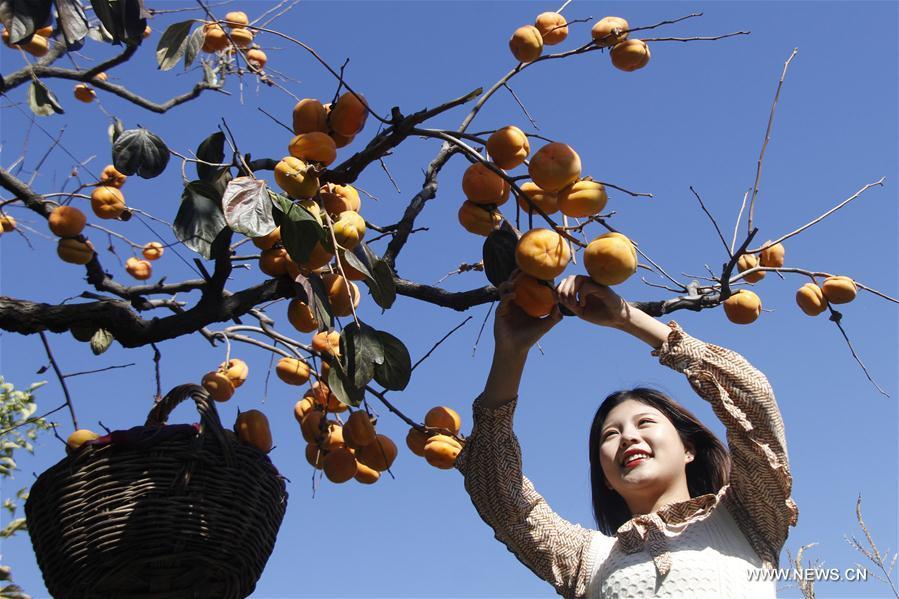 #CHINA-FARMING-SHUANGJIANG (CN)