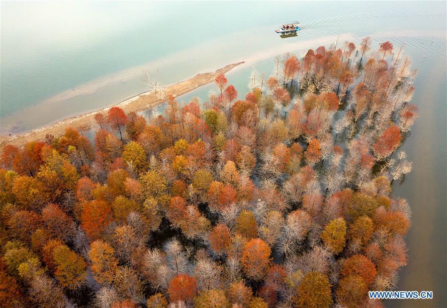 #CHINA-ANHUI-XUANCHENG-LARCH-AUTUMN SCENERY (CN)