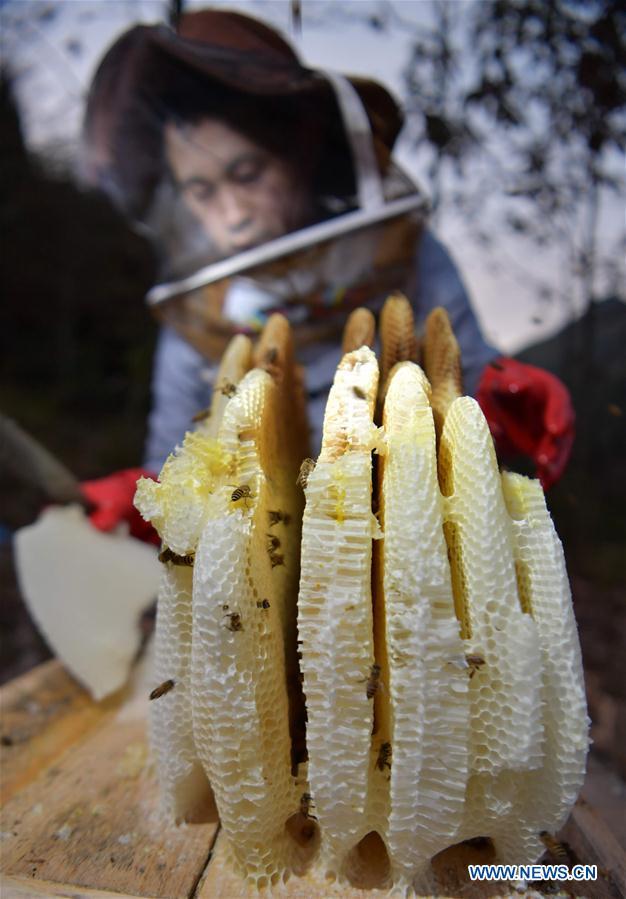 #CHINA-HUBEI-ENSHI-BEE FARM (CN)