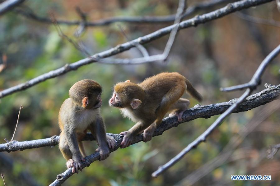 #CHINA-LIANYUNGANG-HUAGUO MOUNTAIN-MONKEY(CN)