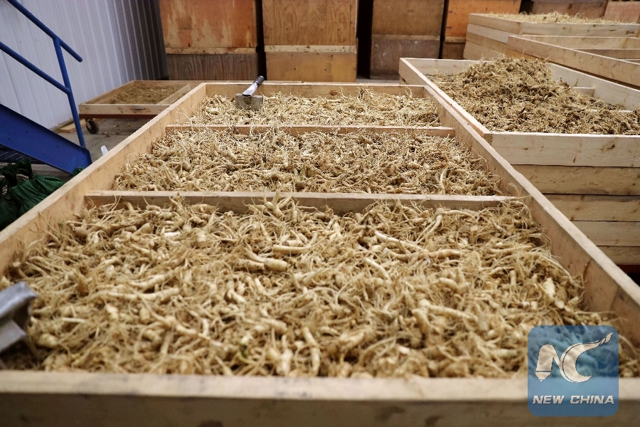 Wisconsin ginseng farmers aim at growing Chinese market