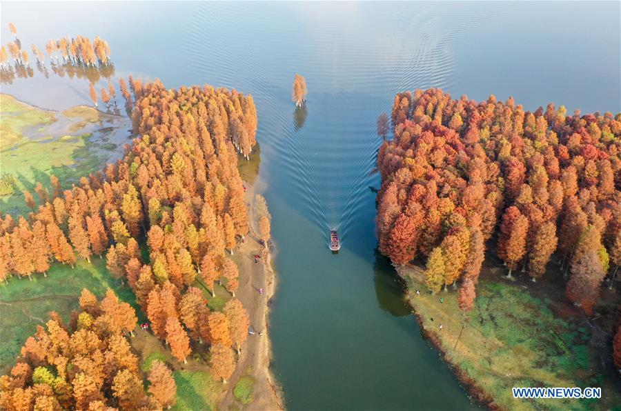 #CHINA-ZHEJIANG-YUYAO-TAXODIUM ASCENDENS (CN)