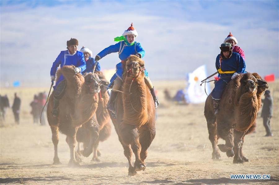 国际骆驼文化节在中国北方的内蒙古举行