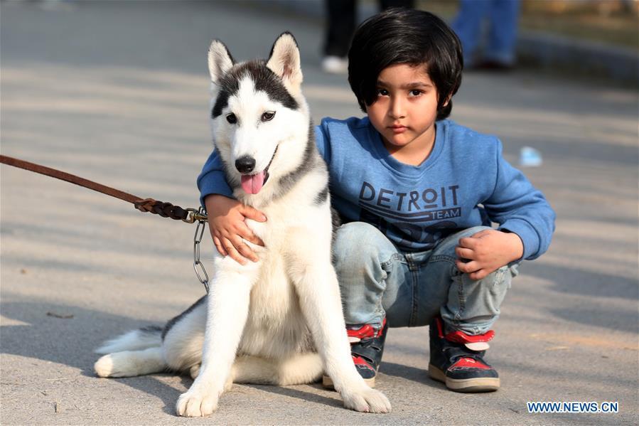 All Breed Dog Show held in Islamabad, Pakistan - Xinhua