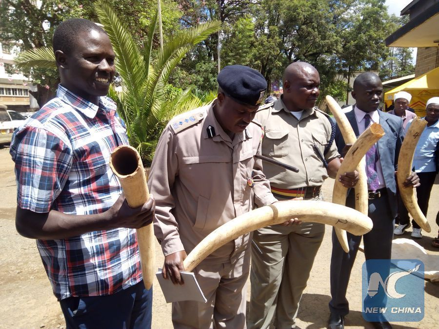 Kenya police seize 11 pieces of ivory tusks