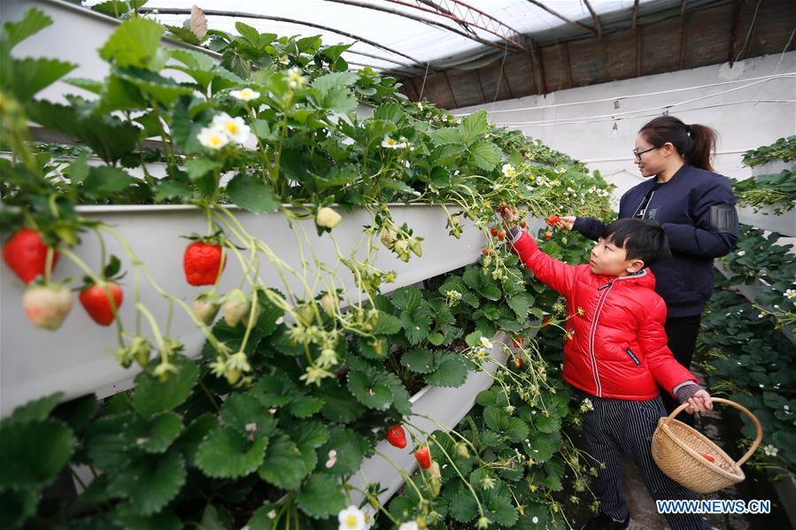#中国 - 山东 - 青岛 - 农业(中国)