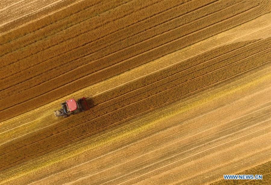 CHINA-MECHANIZED AGRICULTURE (CN)