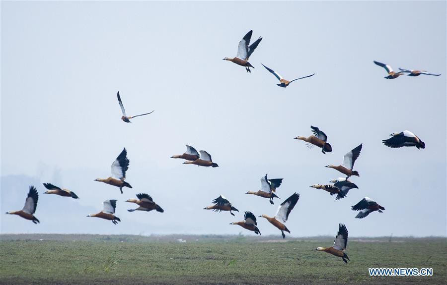 #CHINA-JIANGXI-POYANG LAKE-MIGRANT BIRDS (CN)