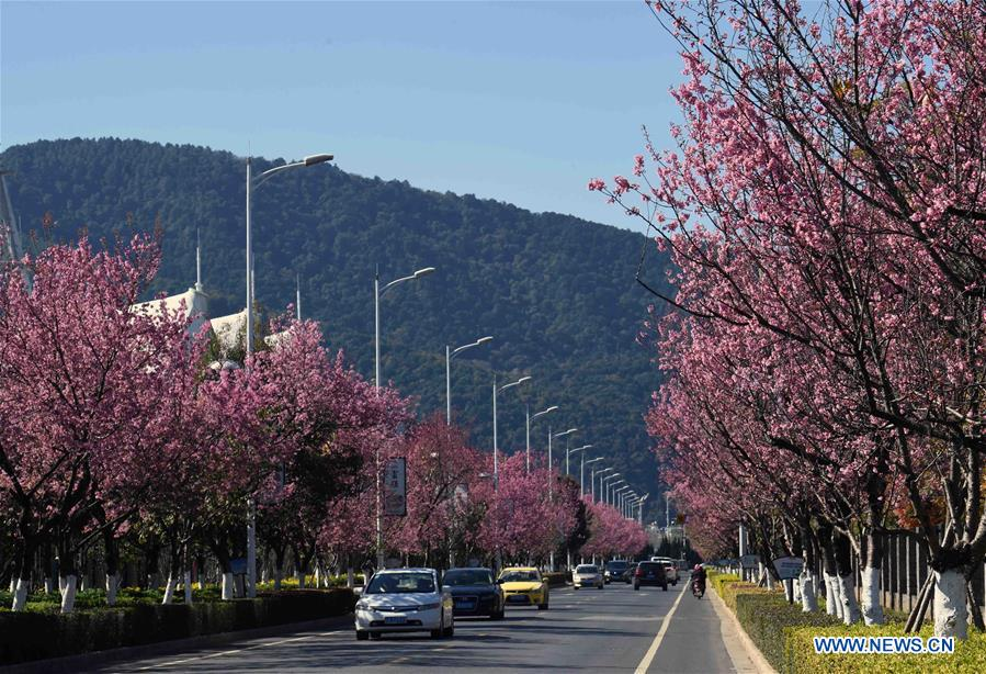 CHINA-YUNNAN-KUNMING-FLOWER BLOSSOM (CN)