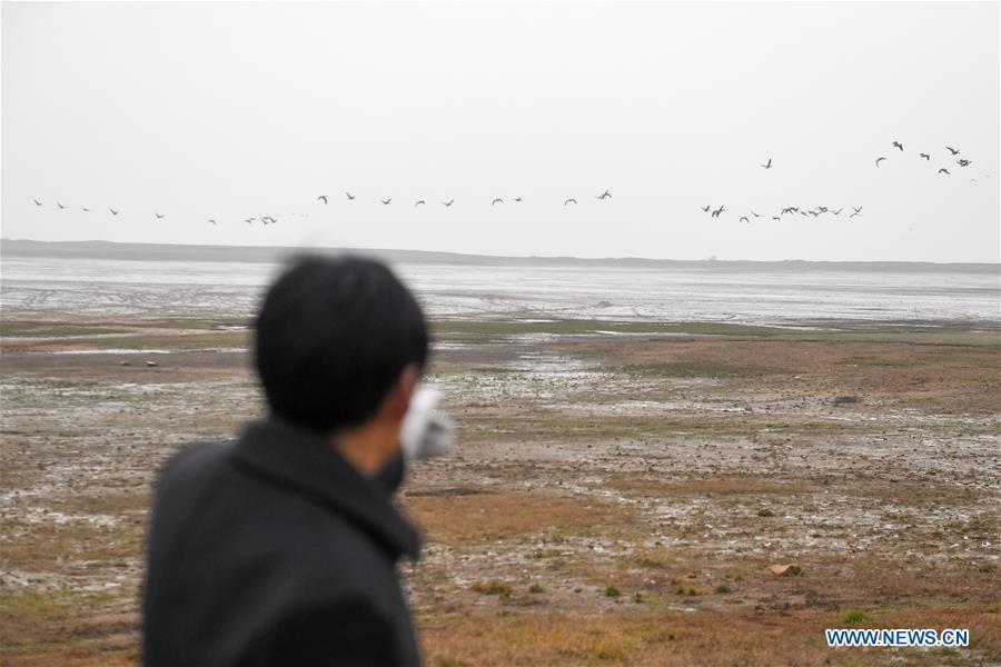 中国东部安徽移民鸟