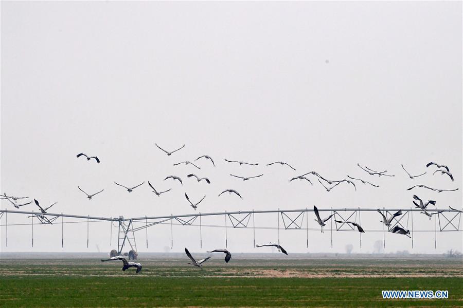 CHINA-HENAN-YELLOW RIVER-MIGRANT BIRDS (CN)