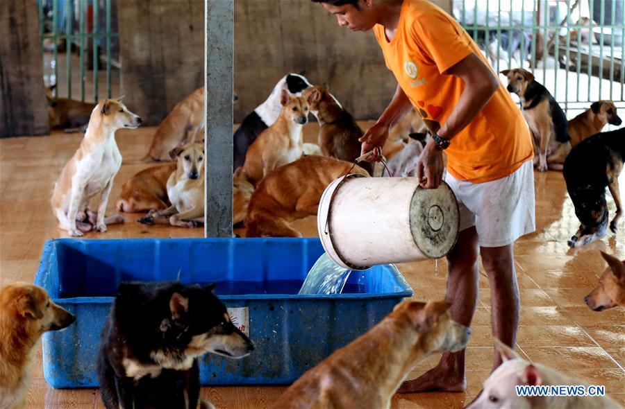缅甸 - 仰光 - 动物庇护所