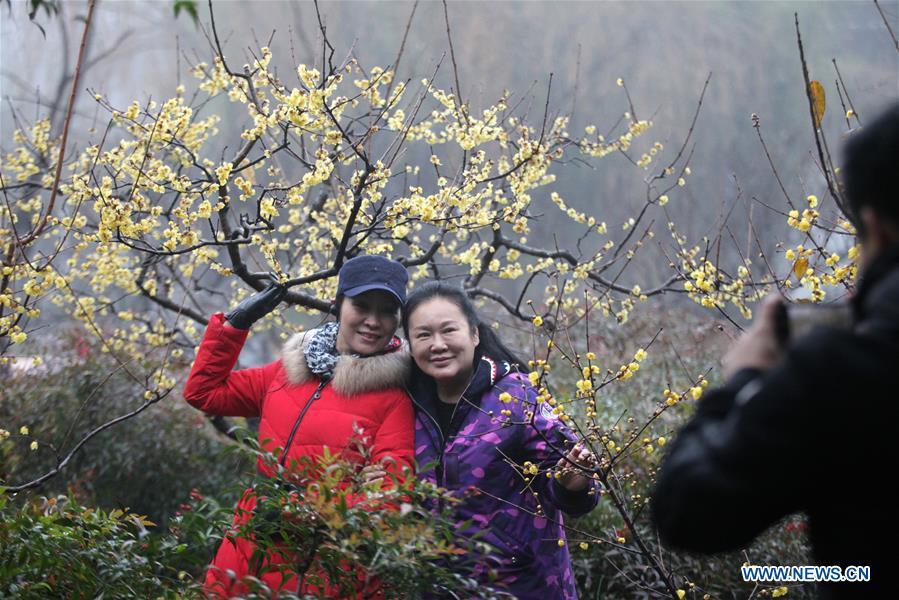 #CHINA-WINTERSWEET BLOSSOMS (CN)