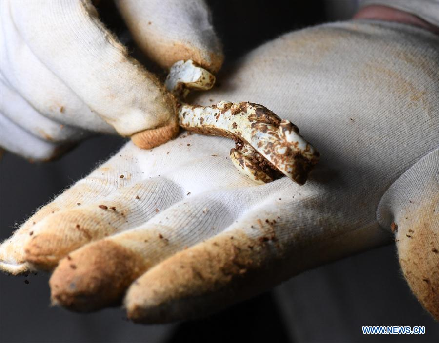 China to strengthen cultural relic protection China to strengthen cultural relic protection - Xinhua - English.news.cn - 웹