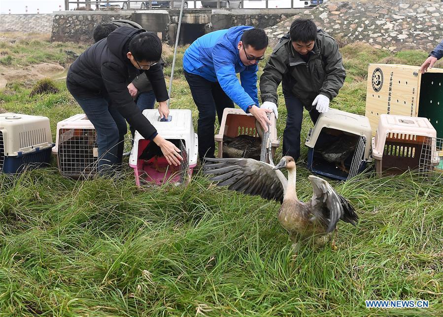 中国 - 江西 - 移民鸟类释放(CN)